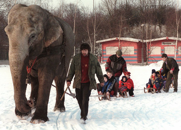 "<div class=""meta image-caption""><div class=""origin-logo origin-image none""><span>none</span></div><span class=""caption-text"">Indian elephant ""Rhena"" ploughs her way through the snow, pulling children's sleighs at the Krefeld, Germany zoo Wednesday, Jan. 8, 1997. ((AP Photo/Karl-Heinz Kreifelts))</span></div>"