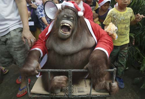 <div class='meta'><div class='origin-logo' data-origin='none'></div><span class='caption-text' data-credit='AP Photo/Aaron Favila'>An orangutan named &#34;Pacquiao&#34; dressed in a Santa Claus costume reacts as he joins an &#34;Animal Christmas Party&#34; at the Malabon zoo in suburban Malabon, north of Manila, Philippines.</span></div>