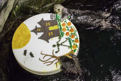"<div class=""meta image-caption""><div class=""origin-logo origin-image none""><span>none</span></div><span class=""caption-text"">Sea otters and penguins feasted on pumpkin and holiday-themed enrichment treats at Chicago's Shedd Aquarium. (Shedd Aquarium)</span></div>"