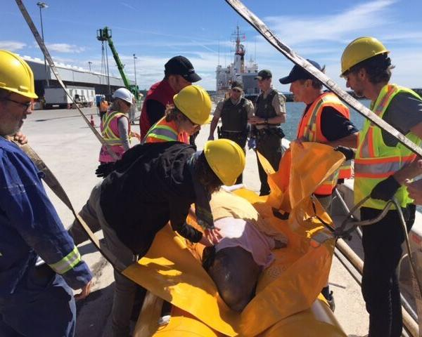 "<div class=""meta image-caption""><div class=""origin-logo origin-image none""><span>none</span></div><span class=""caption-text"">A team from the Shedd Aquarium helped rescue a beluga whale in Canada Thursday. (GREMM)</span></div>"