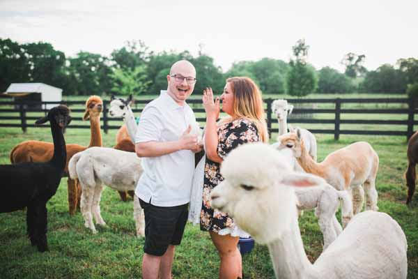 "<div class=""meta image-caption""><div class=""origin-logo origin-image none""><span>none</span></div><span class=""caption-text"">A herd of alpacas photobombed a Tennessee couple's surprise engagement photo shoot at a farm in Tennessee over the weekend.  (John Myers Photography)</span></div>"