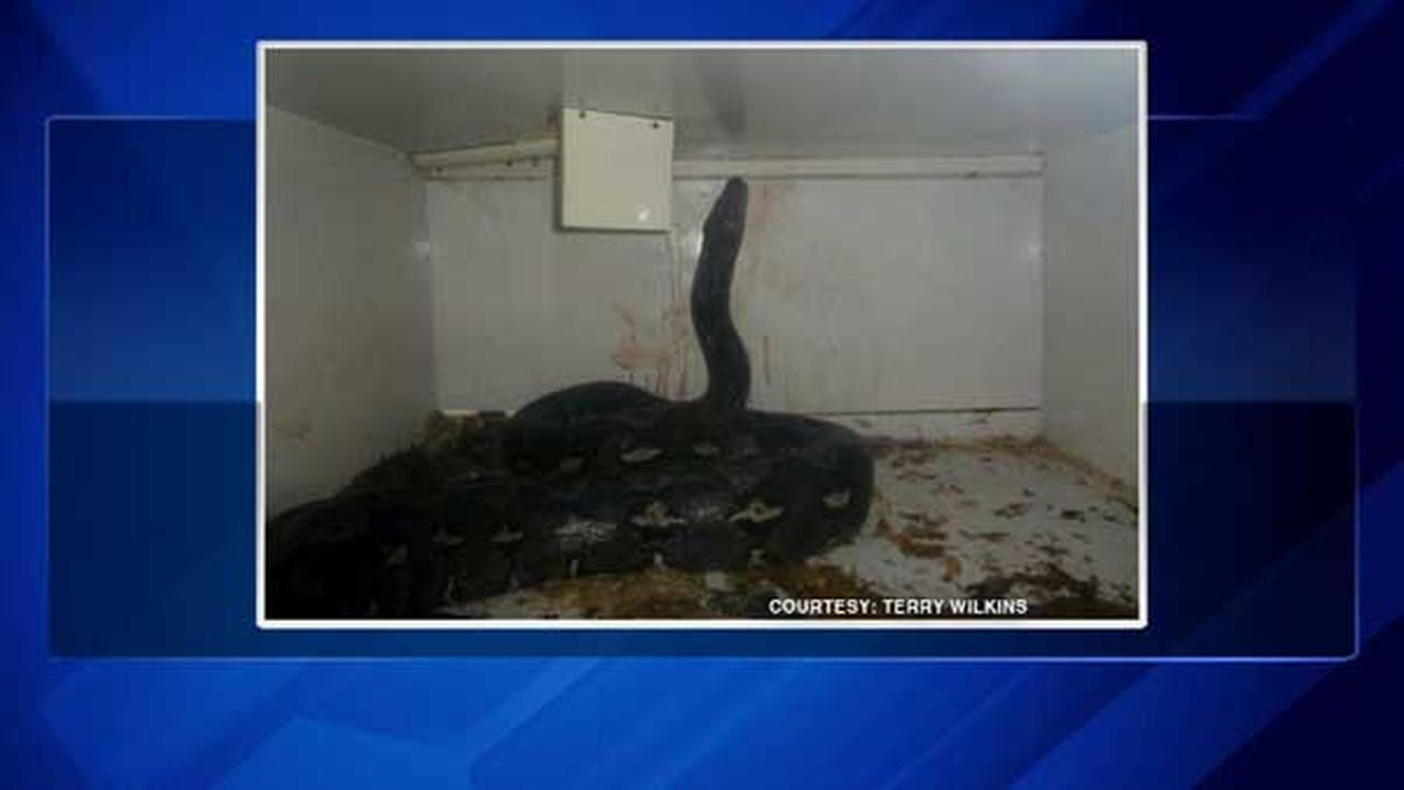 The owner of a northern Kentucky reptile store is recovering after police officers pried off a 20-foot python that was crushing the man.