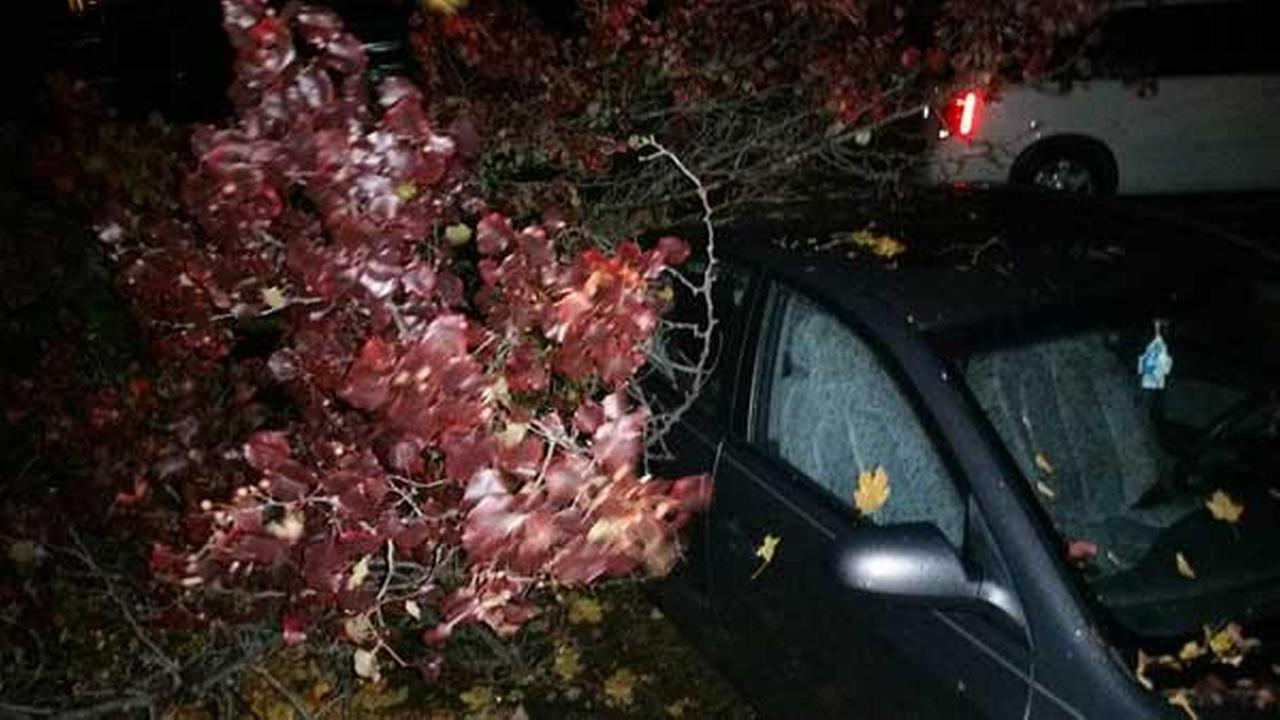Armen Musanovic, of Yorkville, said lightning split a tree in front of his home and caused part of the tree to fall on his fiances car.Photo courtesy of Armen Musanovic via Facebook.