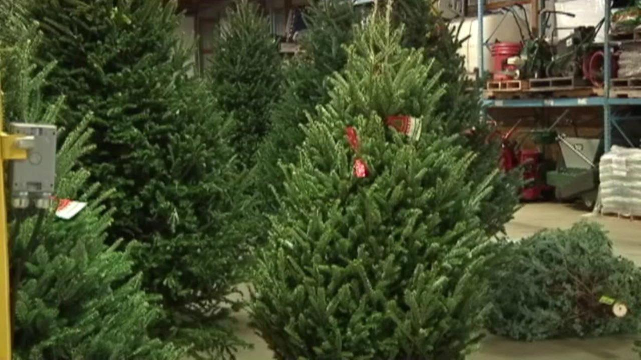 Christmas tree recycling runs through Jan. 17 in Chicago