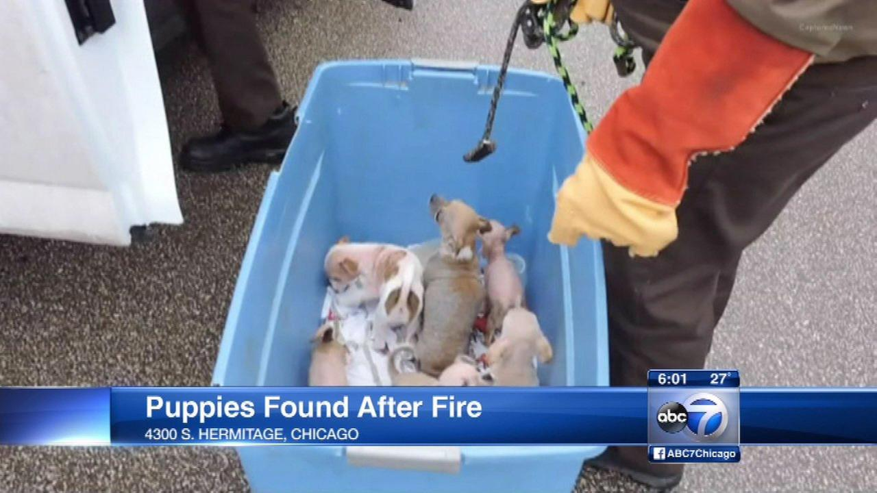 20 puppies rescued after South Side apartment fire