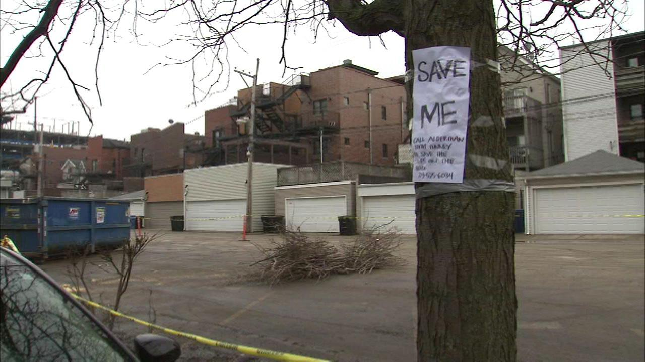 Wrigley Field neighbors upset about cut trees