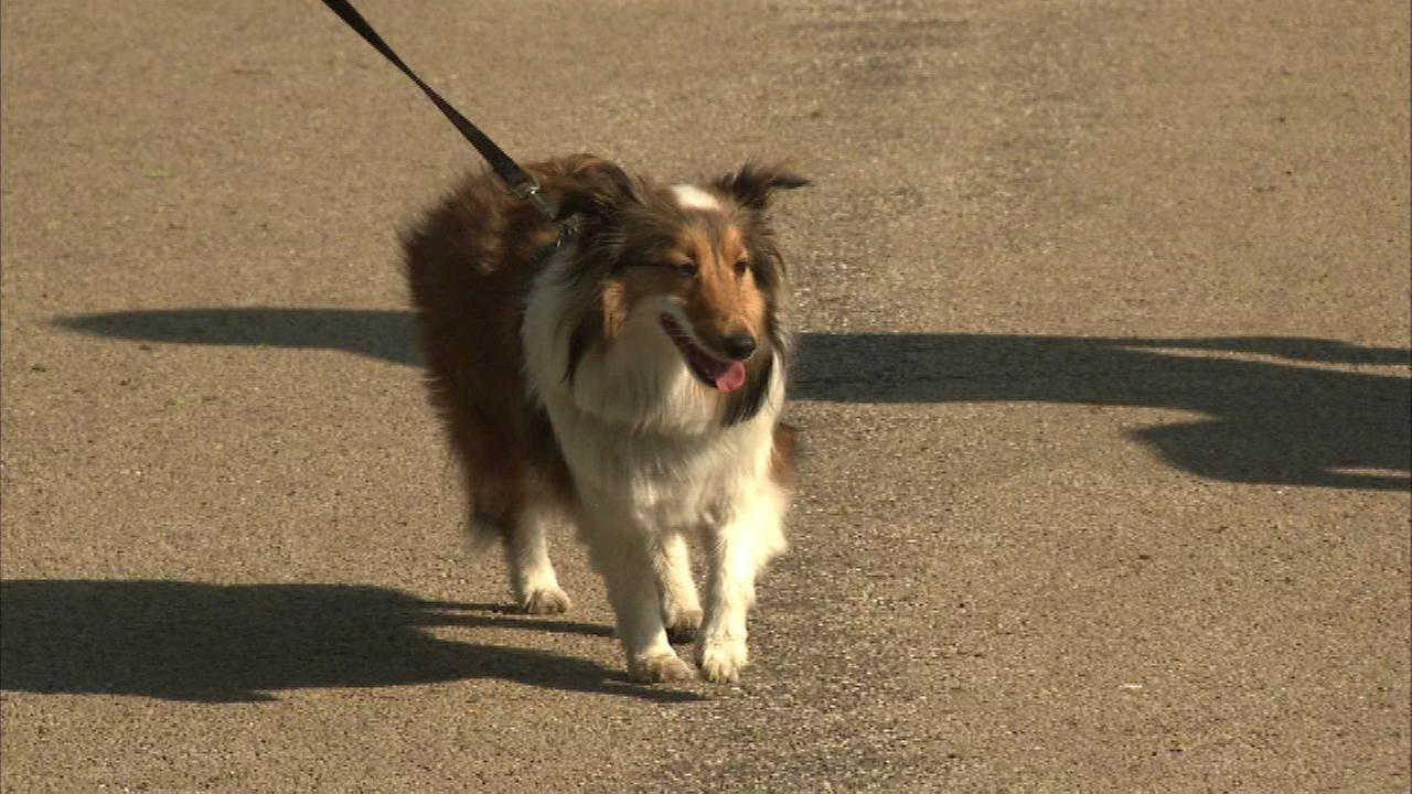 Pet walk to benefit Hinsdale Humane Society