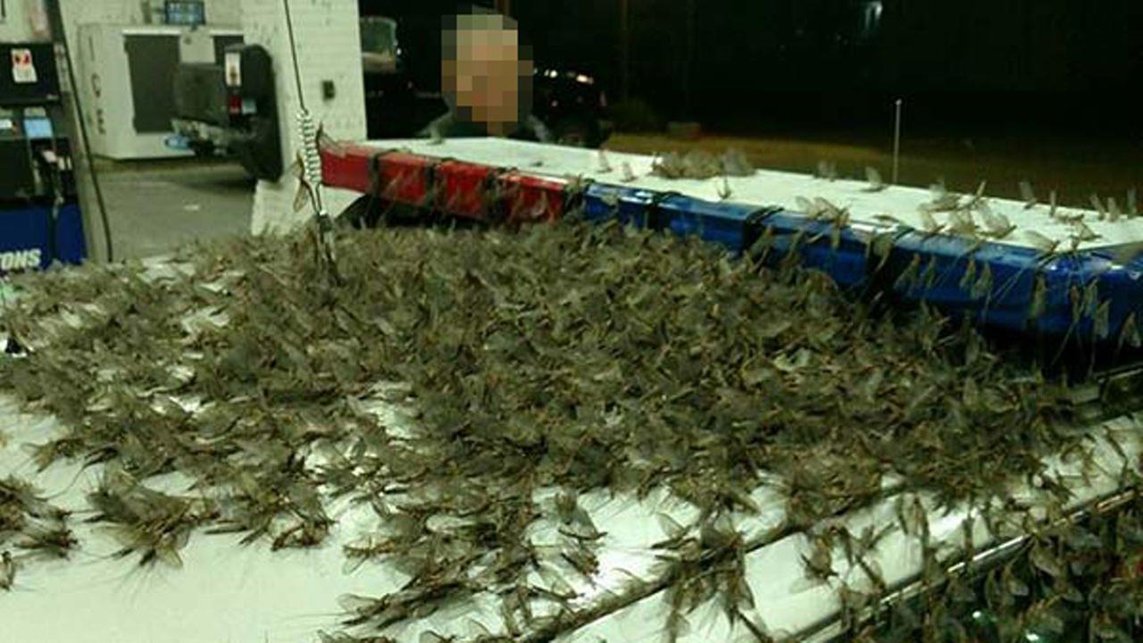 mayflies havana illinois