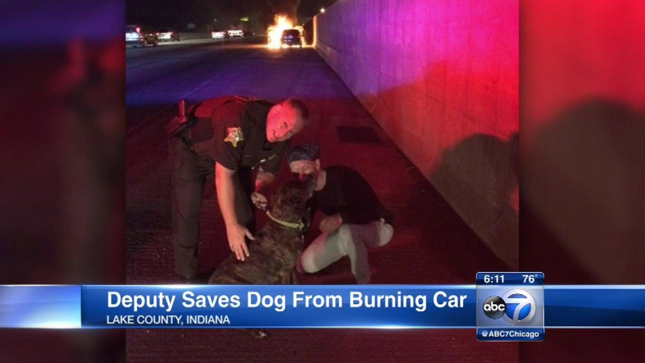 Dog rescued from burning car