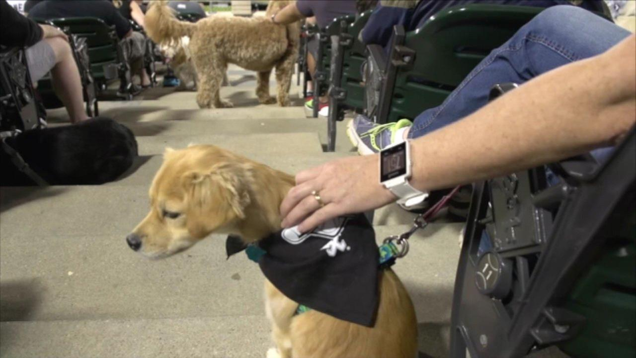 White Sox officials said 1,122 dogs attended the game on September 13, 2016, enough for the team to set a Guinness World Record.