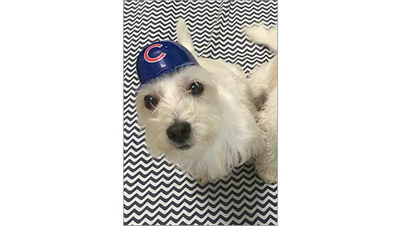 Go Cubs go!ABC7 Viewer