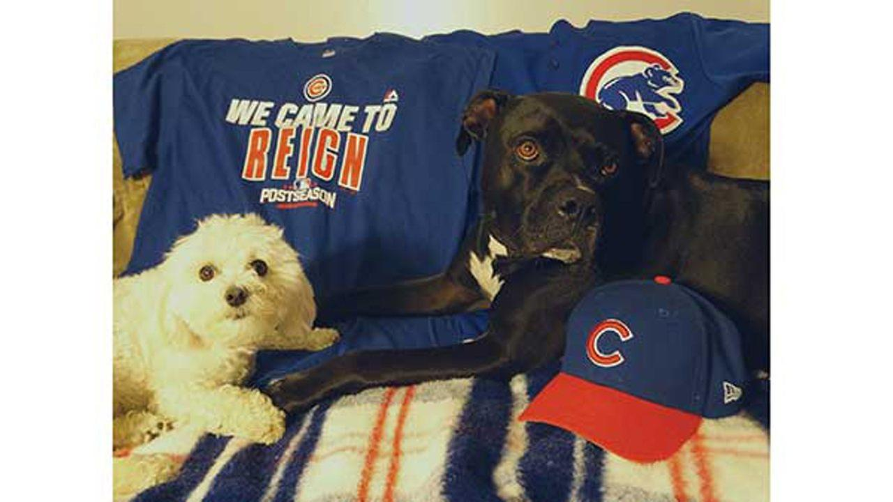 Dogs for the Cubs!GiGi On The Scene via Twitter