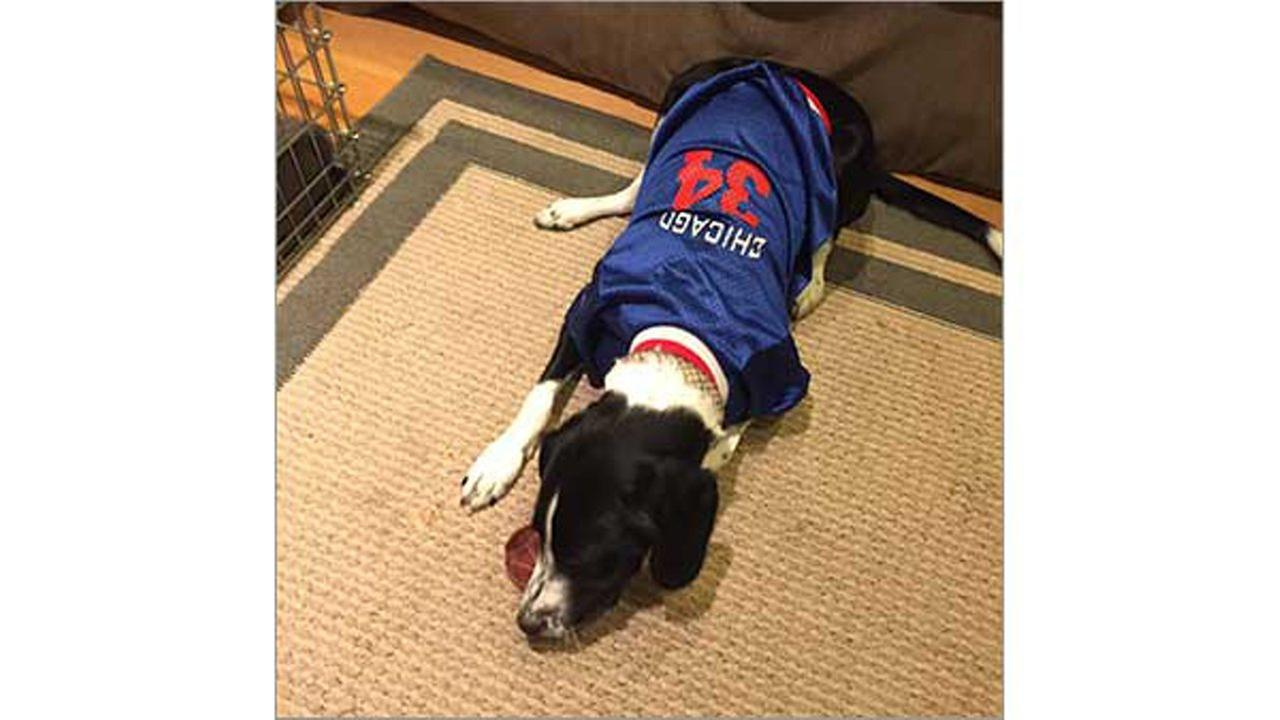 Canine Cubs fanMick Swasko
