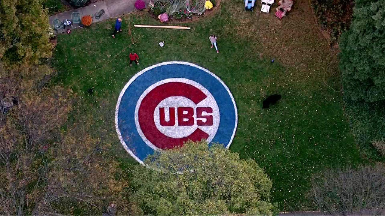 ACubs fan put the team logo on the front lawn of their home.