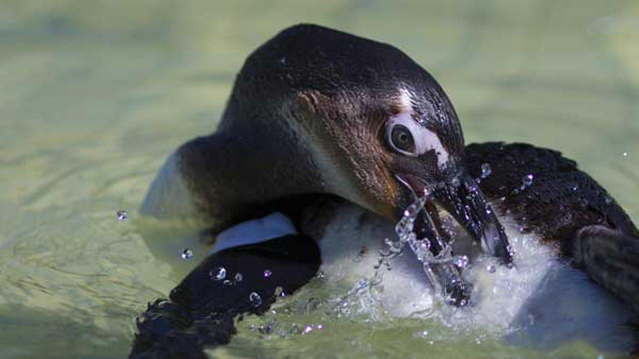 Shedd Aquarium | SANCCOB