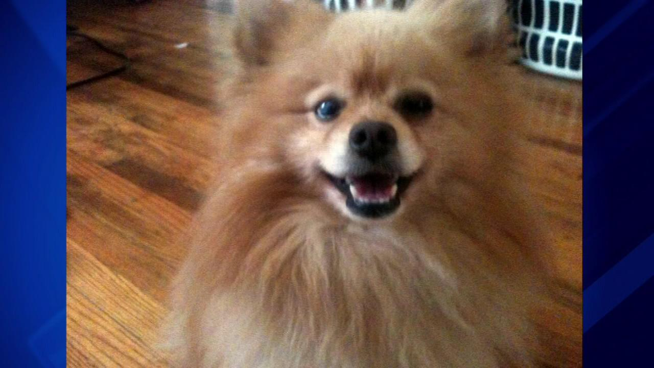 A South Side woman says shes heartbroken after two pit bulls attacked and killed her 5-year-old Pomeranian named Bear.