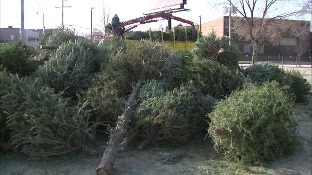 Chicago to begin Christmas tree recycling next week | abc7chicago.com