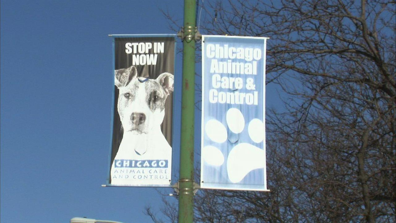 Alderman: City's shelter animals need help