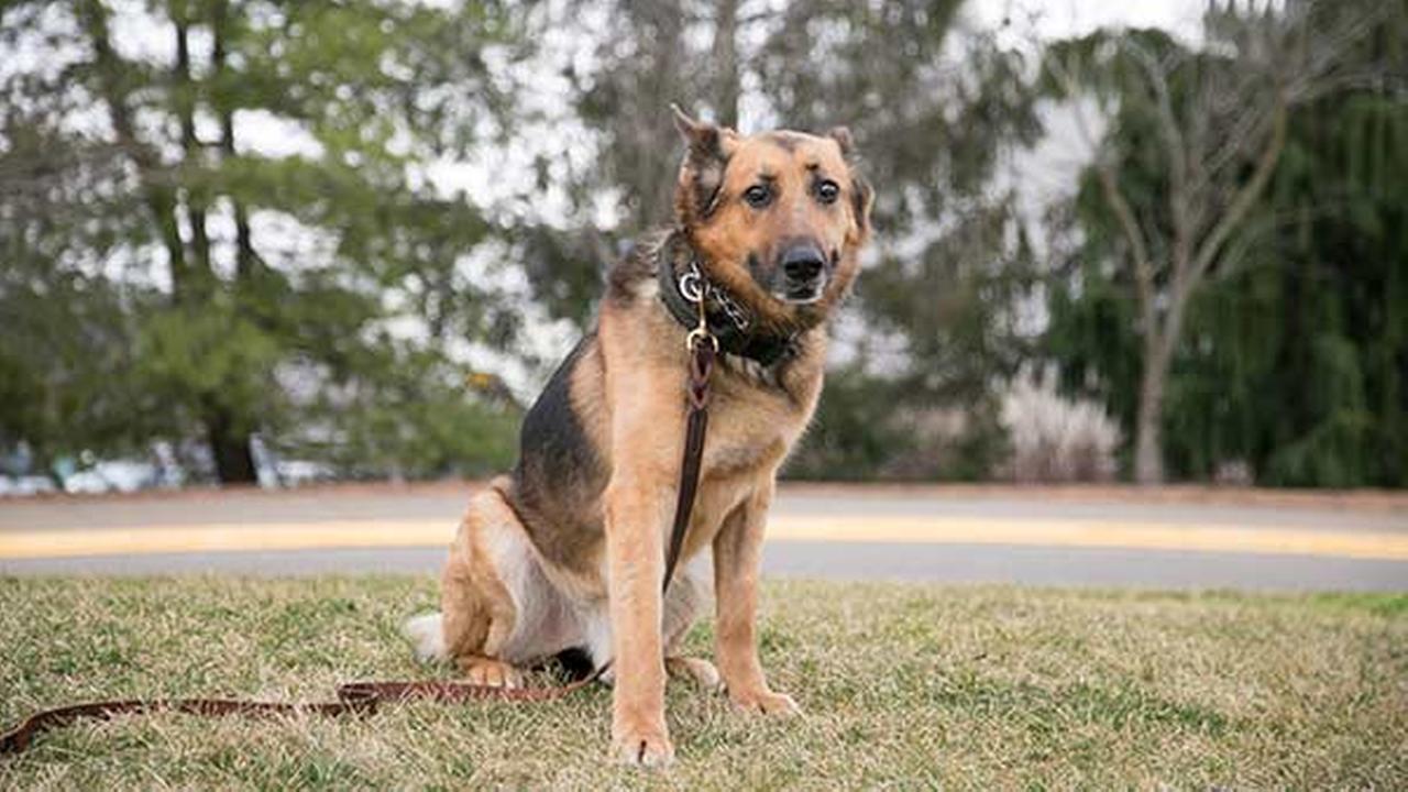 Purdue Veterinary Medicine/Seth BossinghamPurdue Veterinary Medicine/Seth Bossingham