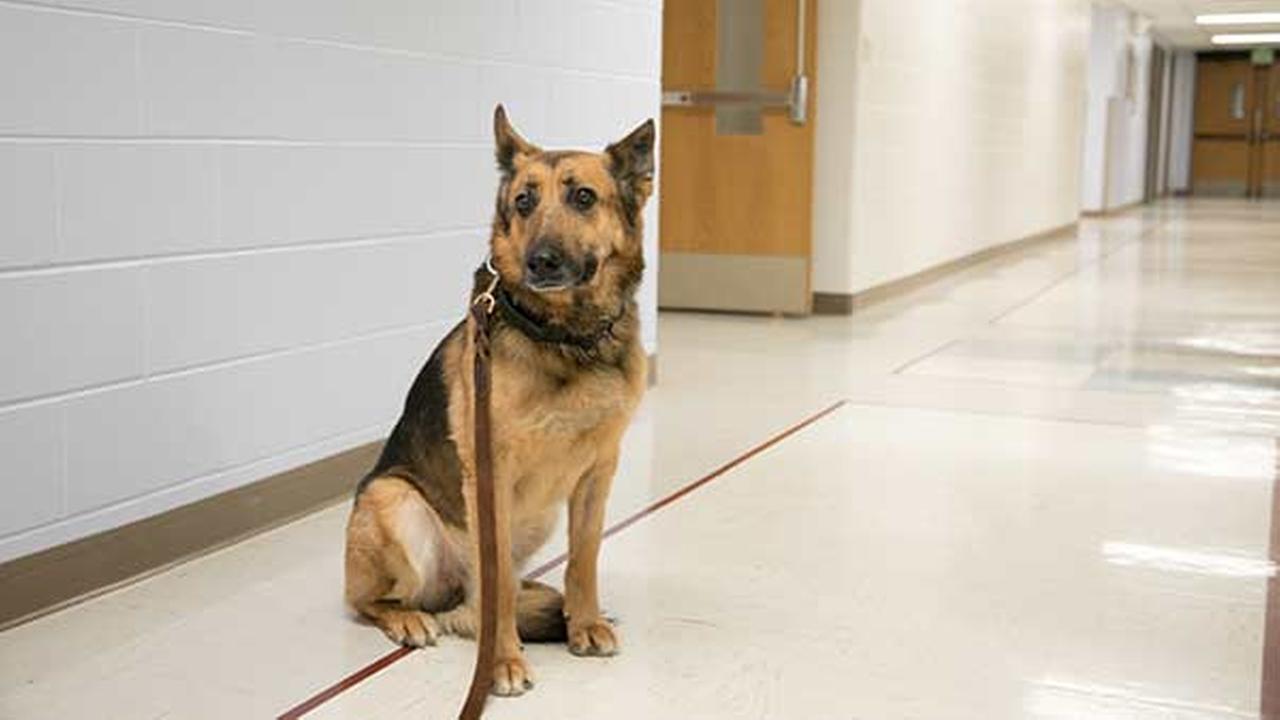 Purdue Veterinary Medicine/Seth Bossingham