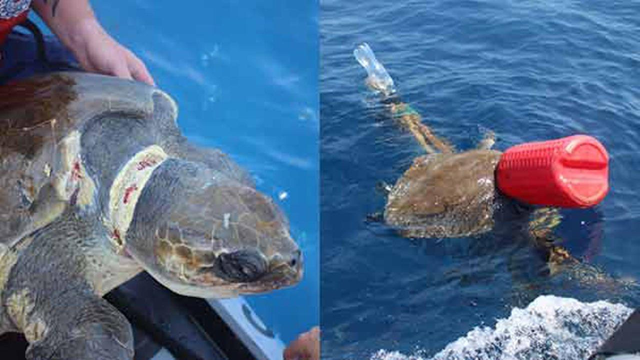 A U.S. Coast Guard crew rescued four endangered sea turtles that had become entangled in garbage in the Pacific Ocean.