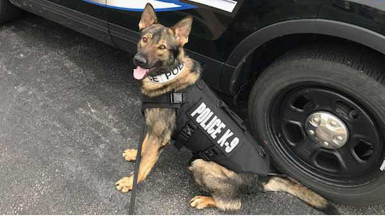 K9 Hutch received the bullet and stab protective vest through the non-profit organization Vested Interest in K9s, Inc.