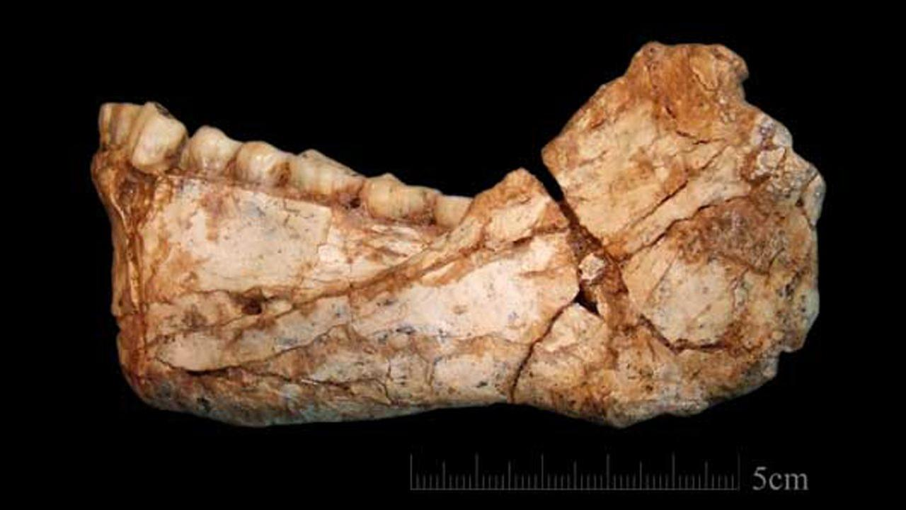 This almost complete human mandible was a remarkable find for the researchers and its dental aspects are very similar to modern humans.