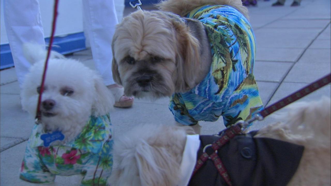 Dogs were invited to put on their best Hawaiian shirts for an evening of mixing and mingling.