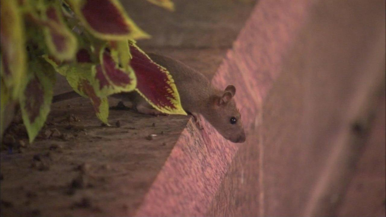 Emanuel proposes more crews, garbage bins to combat rats in Chicago