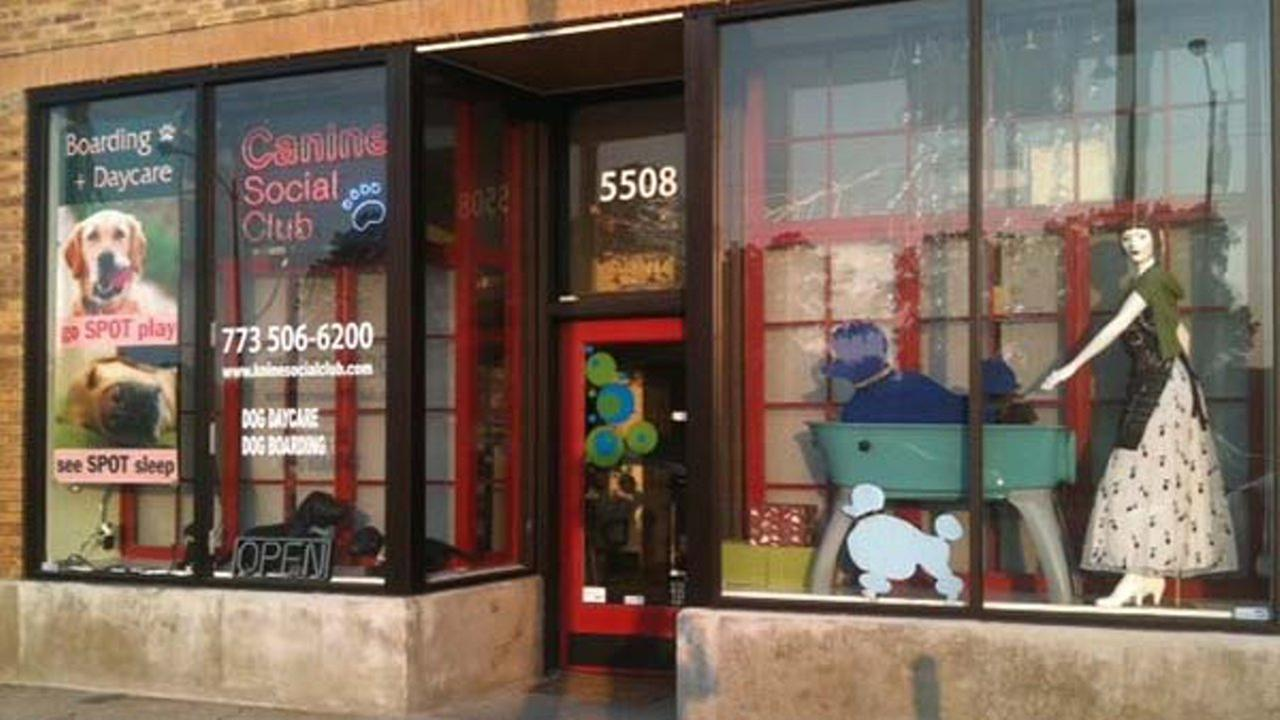 Canine Social Club, located in the 5500-block of North Western Avenue in Chicago. Canine Social Club