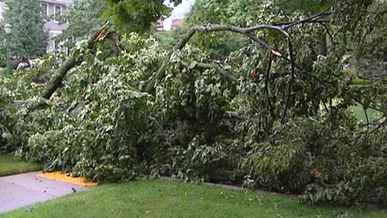 Downed trees after severe weather in Wilmette, Ill.