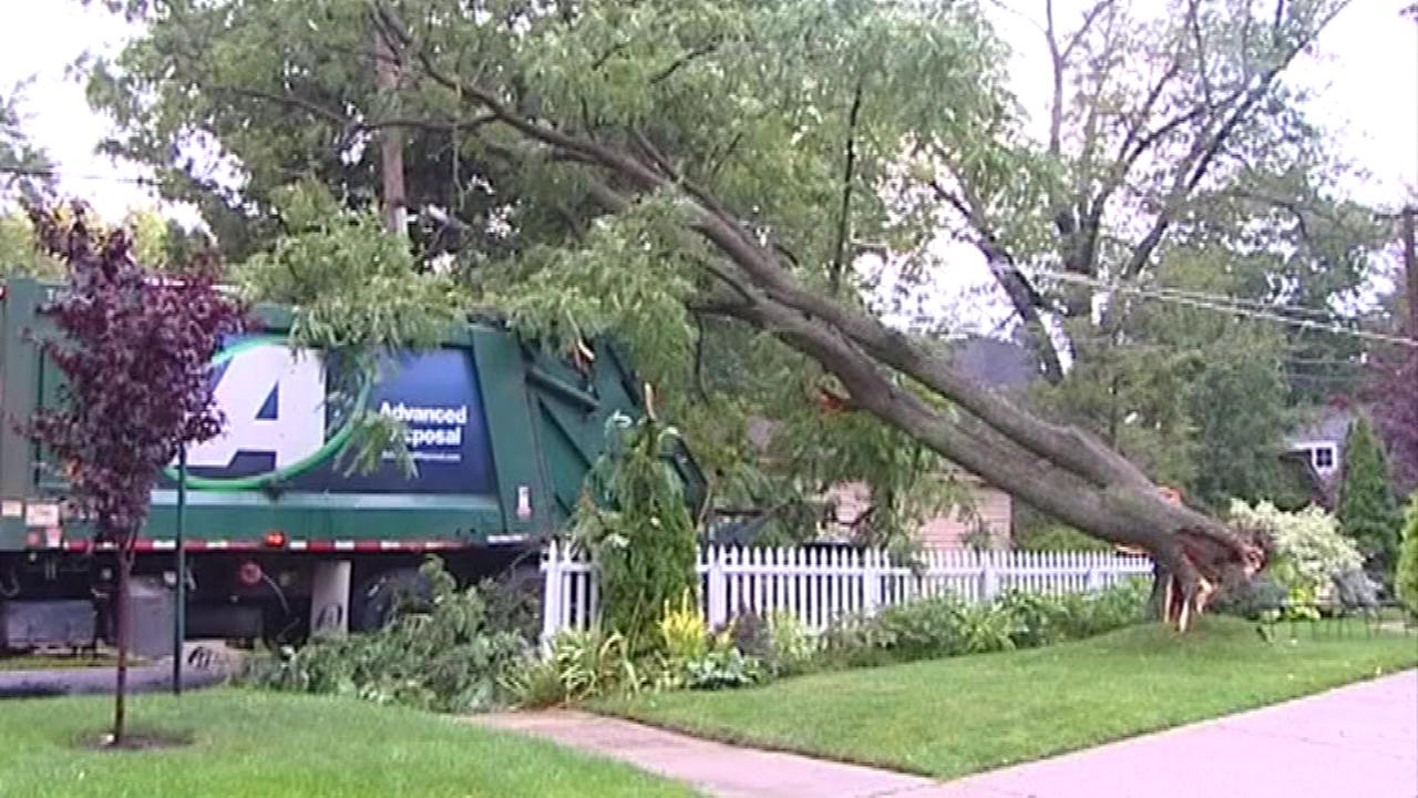 A downed tree in Wilmette, Ill.