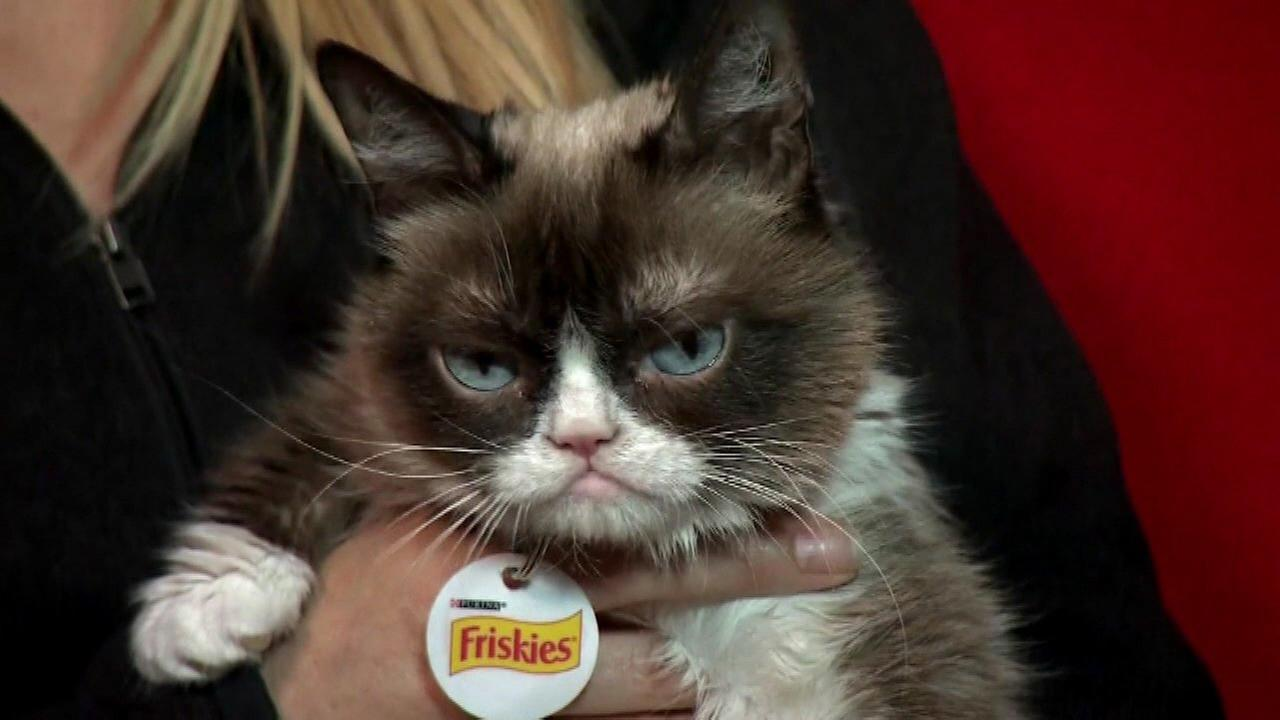Smile! Grumpy Cat wins £500000 over copyright breach