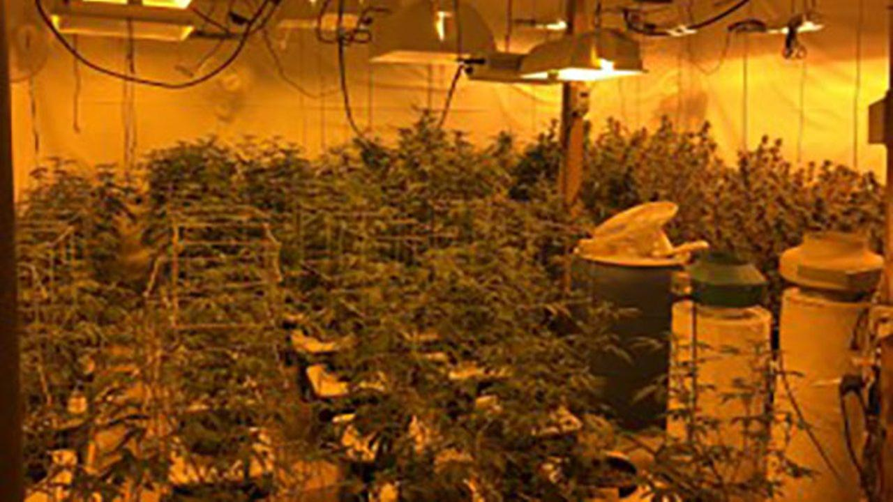 About 200 cannabis plants were found in a warehouse Tuesday in west suburban Elburn. Via Sun-Times Media Wire.