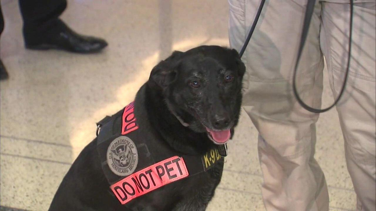 Midway Airport explosives-sniffing dog retires; Lacy was first-ever TSA-certified K9