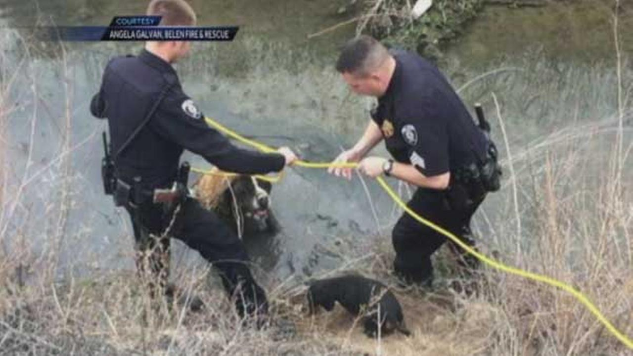 Little dachshund saves big St. Bernard from ditch in New Mexico