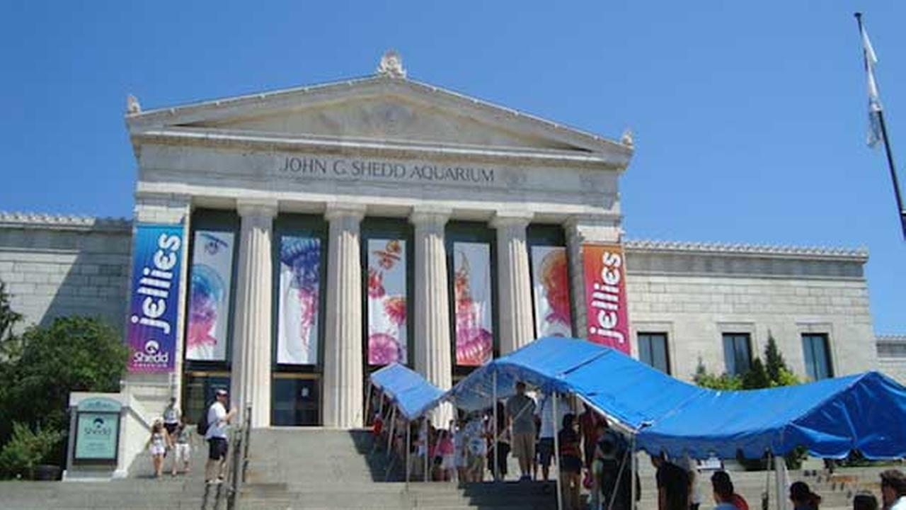 Free shedd aquarium admission for illinois residents thru Aquarium free days