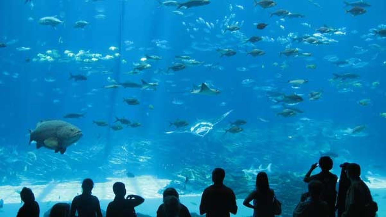 No. 1: Georgia Aquarium in Atlanta, Ga.