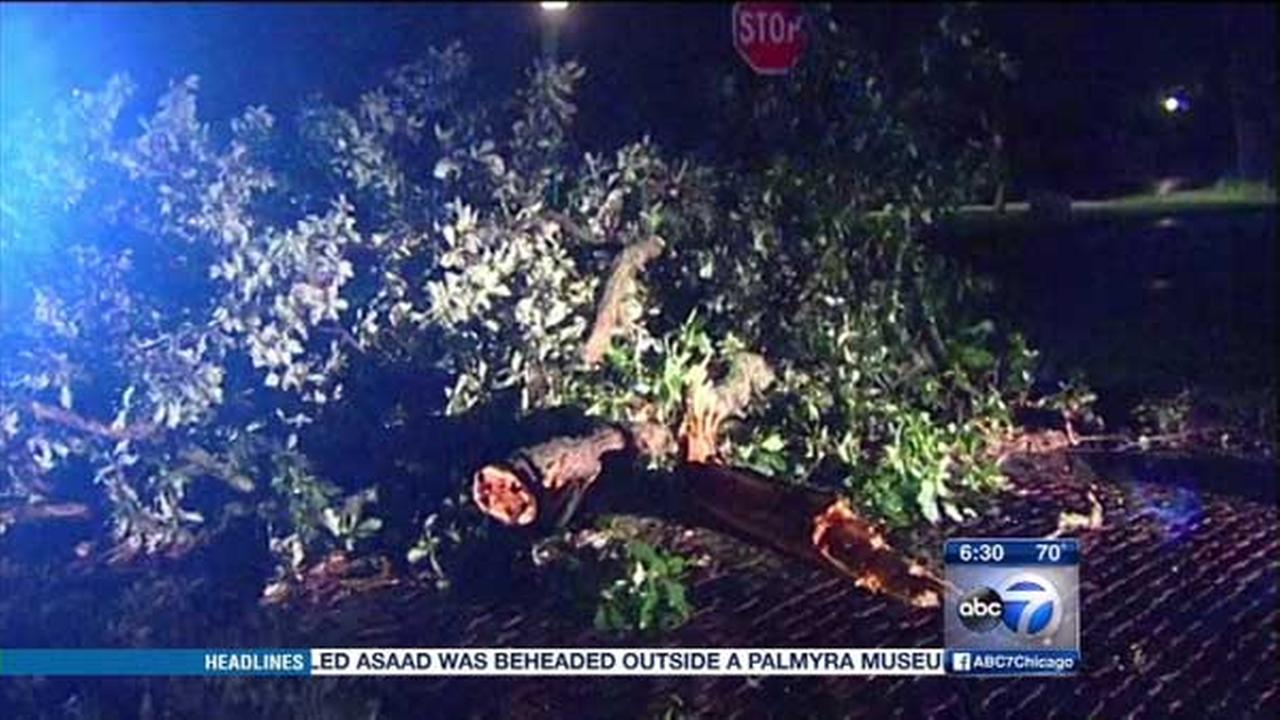 Cleanup is underway after severe storms ripped through the Chicago area and took down trees.