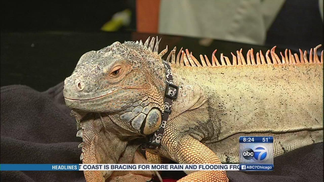 Reptile trade show