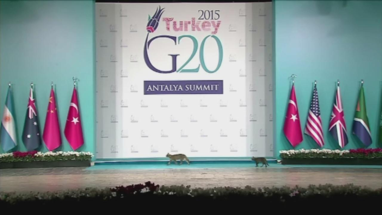 Stray cats invade G20 summit
