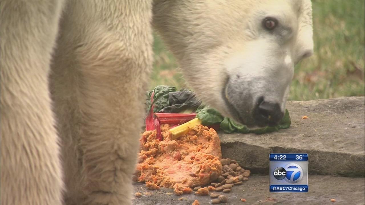 Brookfield Zoo celebrates Bearhog Day