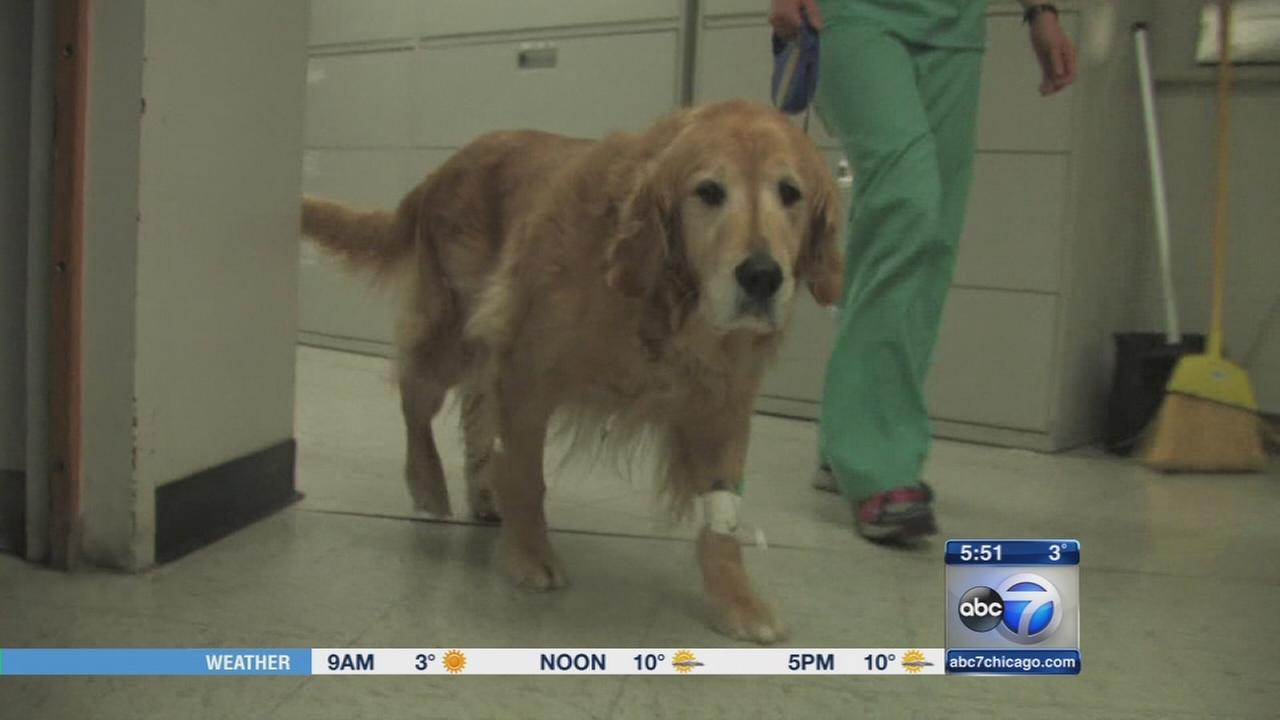 Cancer vaccine for dogs may have use in children