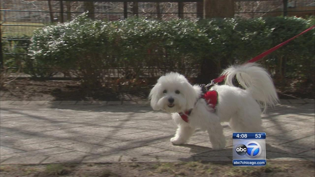 Cook Co. pet owners warned of distemper epidemic