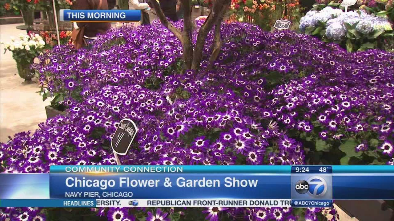 Spring is in bloom at Chicago Flower Garden Show abc7chicagocom