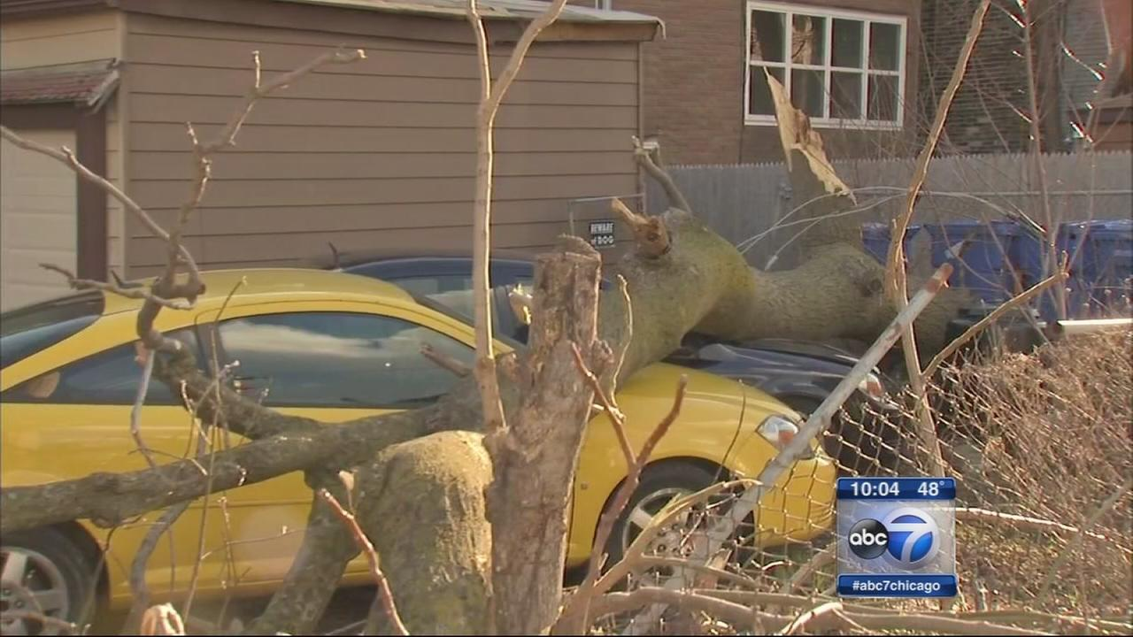 Gusty winds cause damage across Chicago area