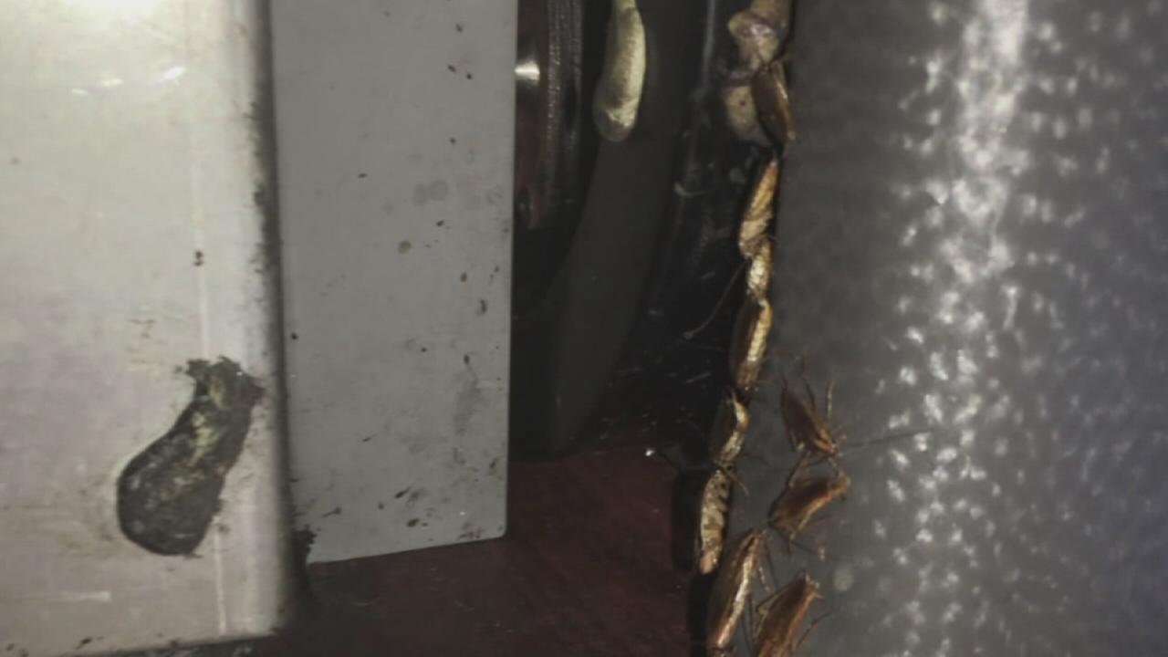 Man finds clump of roaches on Florida bus