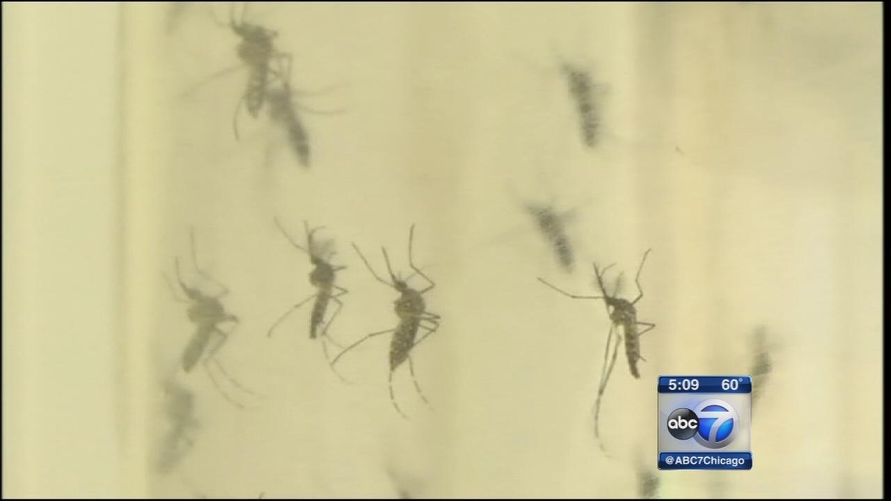 Doctors urge Zika precaution as summer approaches
