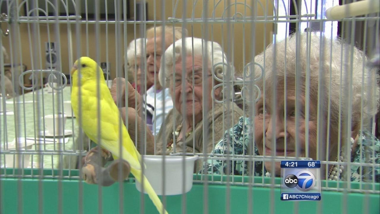 Parakeet named Sunny brightens days for seniors