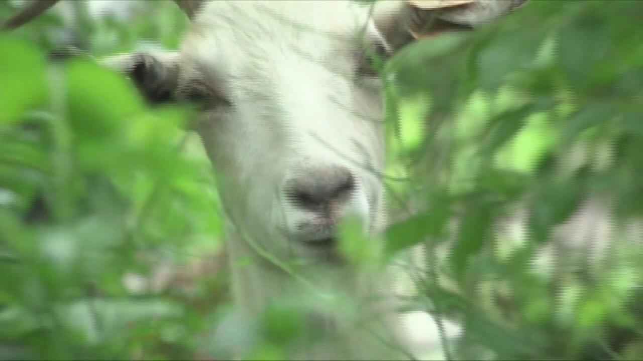 Goast on the Run